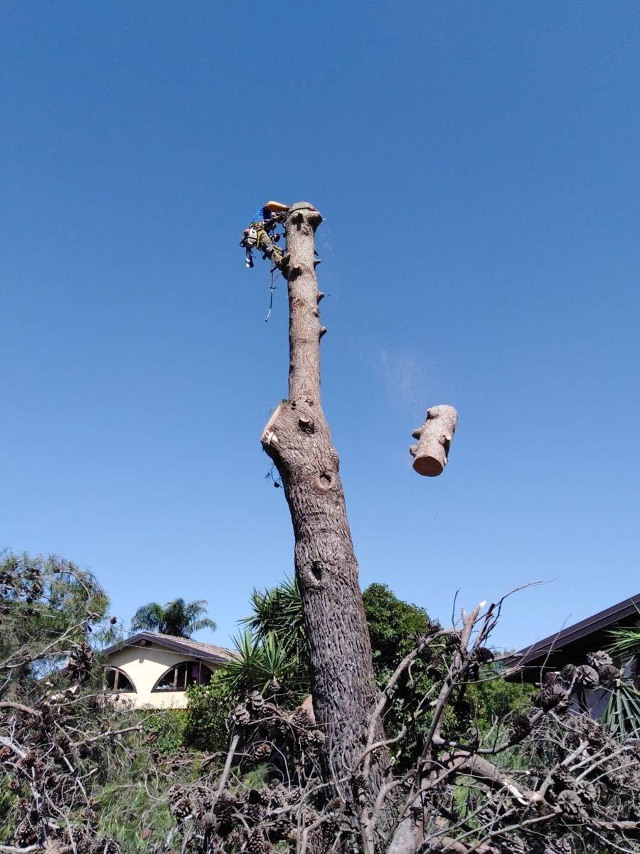 tree climbing, catania, siracusa, messina