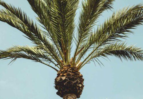 pulire palma