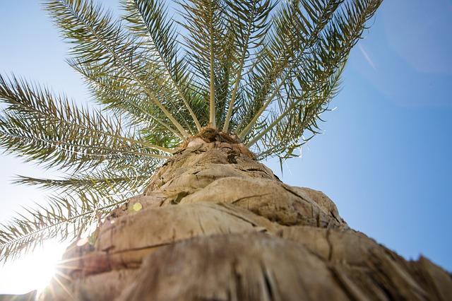 pulire il tronco delle palme