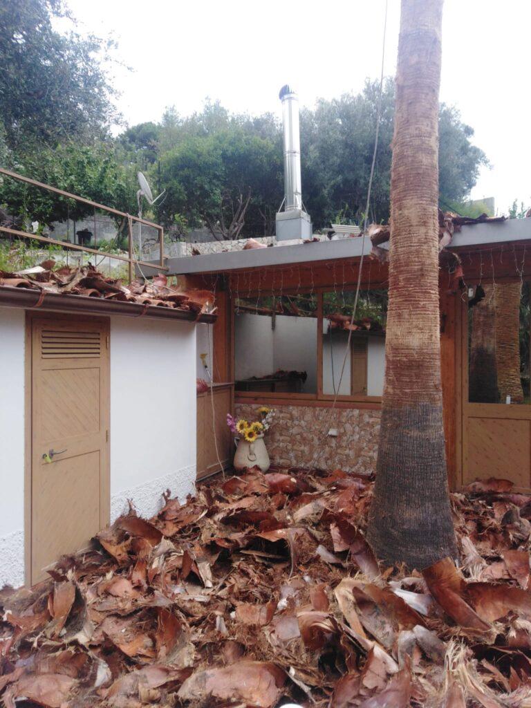 pulizia tronco palme
