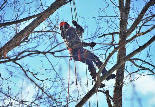 tree climbing Catania, potatura acrobatica catania